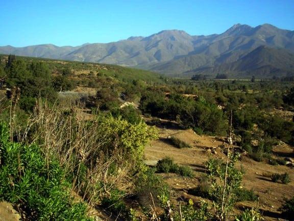 Mensura Forestal- Inventarios Forestales